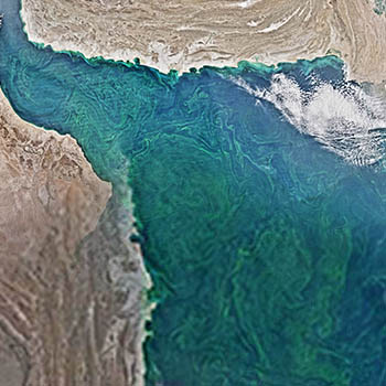 Algal Bloom in Arabian Sea Linked to Climate Change