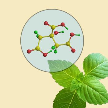 Molecular Leaf